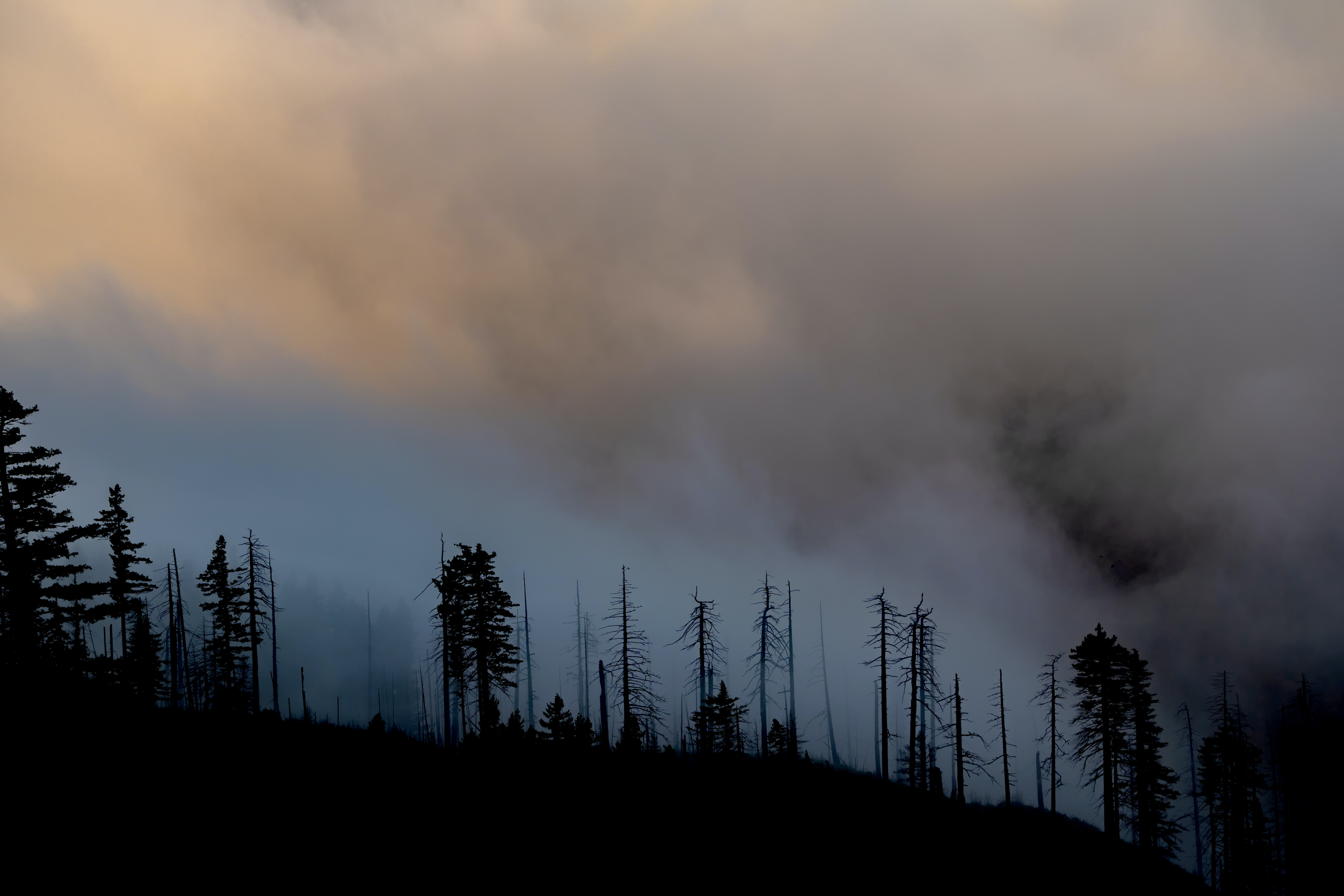 Air Quality Planning for Wildfire Smoke Cohort